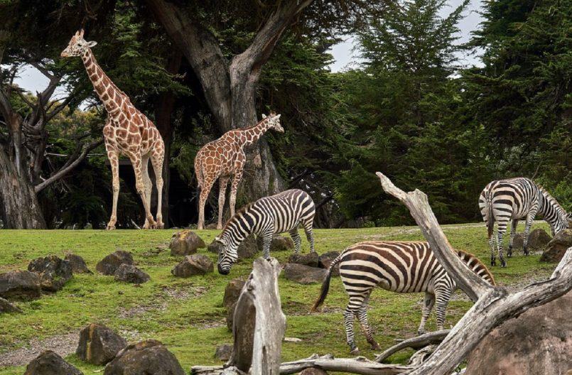 Ambanis to build world's largest zoo in Jamnagar of Gujarat