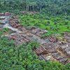 Indigenous groups file lawsuit against French Retailer over Amazon rainforest destruction