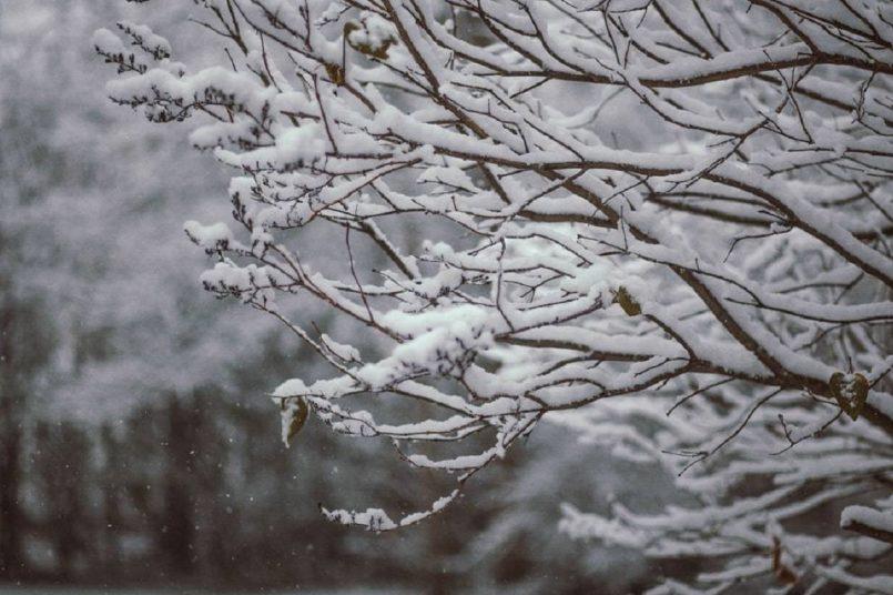 IMD predicts rain and snowfall in W. Himalayas