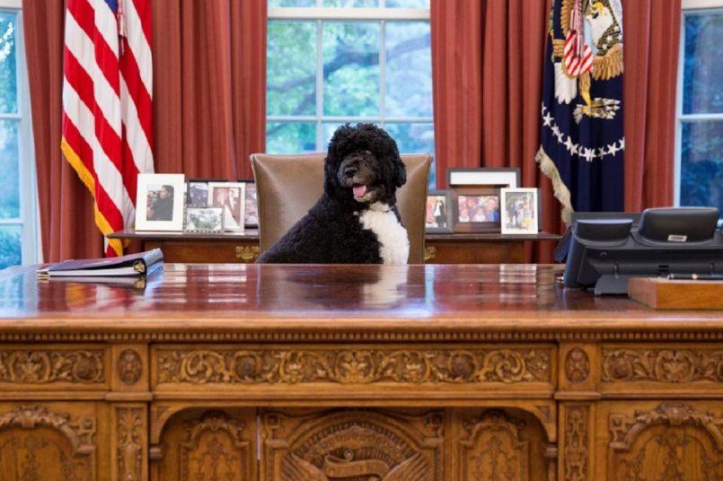 Farewell, Bo: Barack Obama's beloved dog dies of cancer