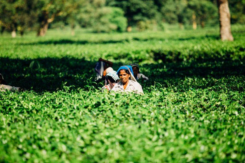 5 startups providing jobs in rural India