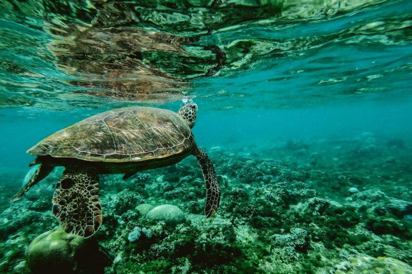 Unesco, Australia spar over Great Barrier Reef, World Heritage site in danger