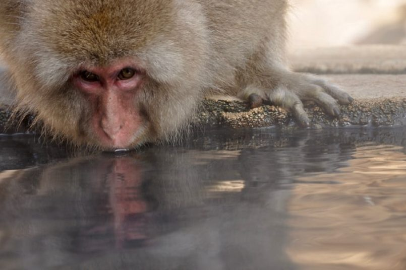 First human death from monkey B virus in China